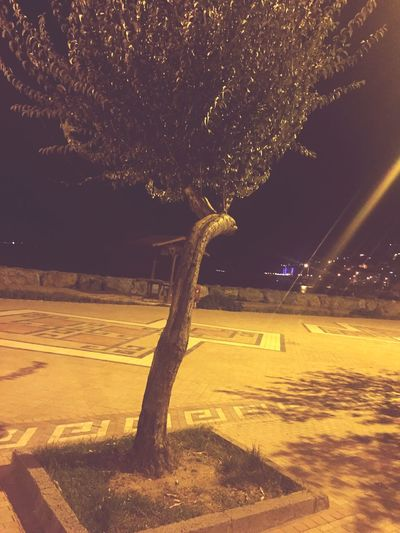 Yamuk ağaç 🖐🏻