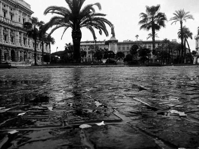 Rome Italy🇮🇹 Travel Monochrome Nopeople Palms Travel Photography Rainy Tree Water City Puddle Palm Tree Flood Wet Reflecting Pool Reflection Sky Rain Moving Around Rome