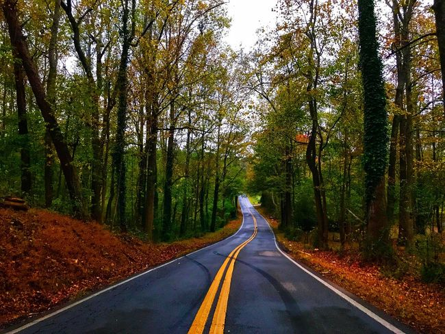 Tree The Way Forward Road Transportation Forest Nature Tranquil Scene Country Road No People Outdoors Growth Scenics Beauty In Nature Landscape Road Country Roads Sky Fall Backroads Backroad Photography Georgia Autumn Autumn Collection Autumn Colors Countryside