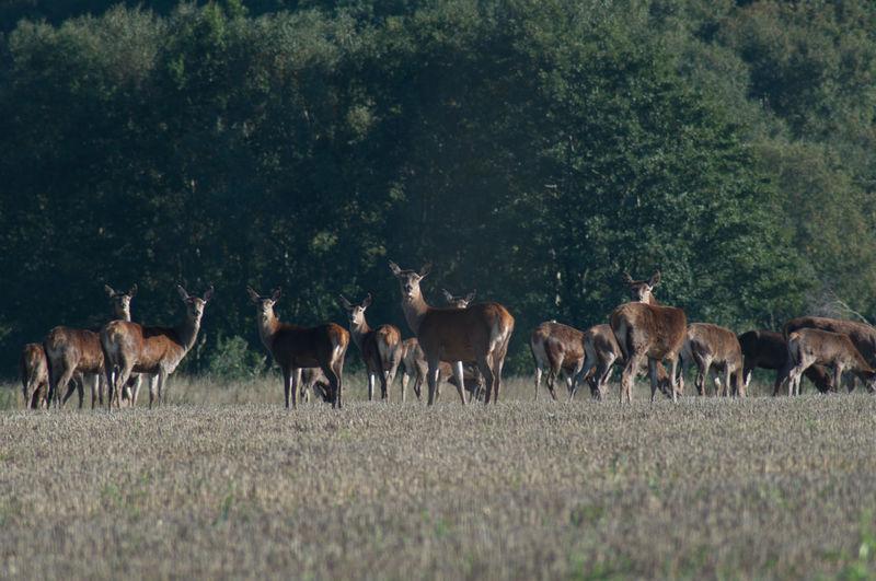 Side view of deer on landscape