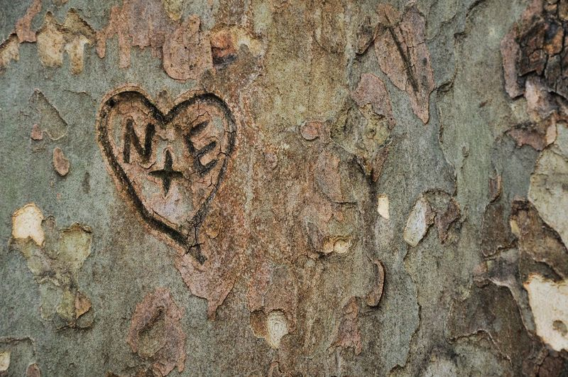 My Best Photo 2015 Pattern Pieces Nature Enjoying Life Love