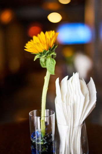 Beauty In Nature Close-up Drink Drinking Glass Flower Flower Head Focus On Foreground Food And Drink Freshness Table EyeEmNewHere