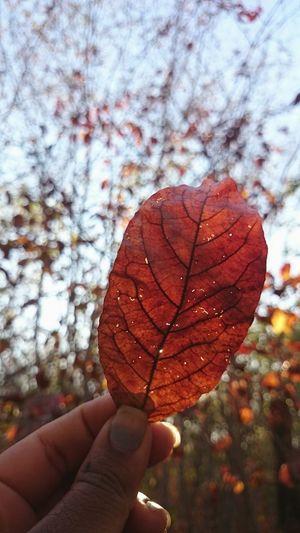 Folhaseca Folhas Que Caem Natureza ...