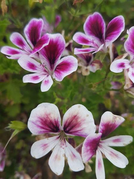 Flowers Plant Nature Purple Pink Color Beauty In Nature Flower Head Orchid Wildorchid Pinkflower Wildflower Purpleflowers Mountain Pasto Jardin Alpes Alpi Montagna Fiori Fioriselvatici Orchidee Orchidea Selvatica Natura Prati
