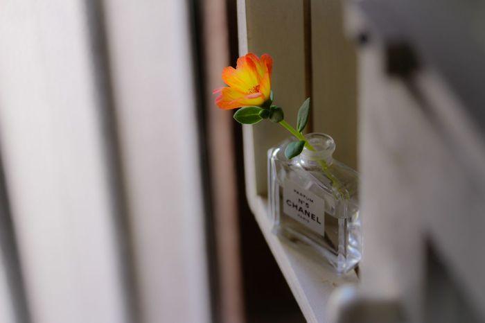 庭の花を飾る ささやかでも丁寧な暮らしが好き Flowerlovers My House Enjoy Life My Unique Style Perfume Bottle Light And Shadow