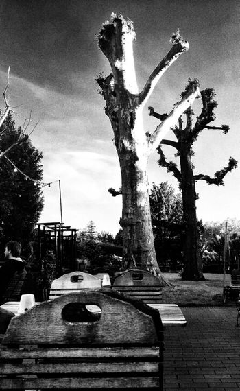 The Ents (2 of 2) TreePorn Tree_collection  Bw_collection The Ents