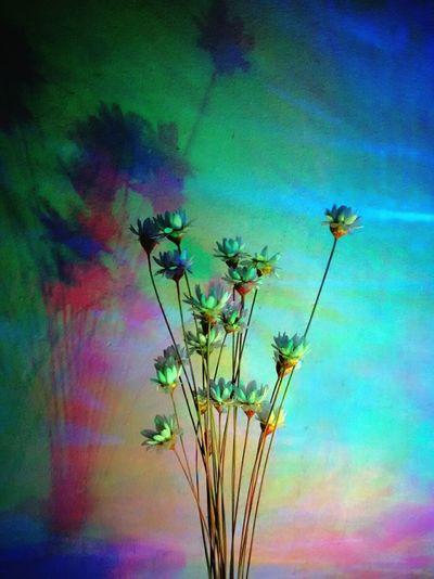 Flowers,Plants & Garden Light