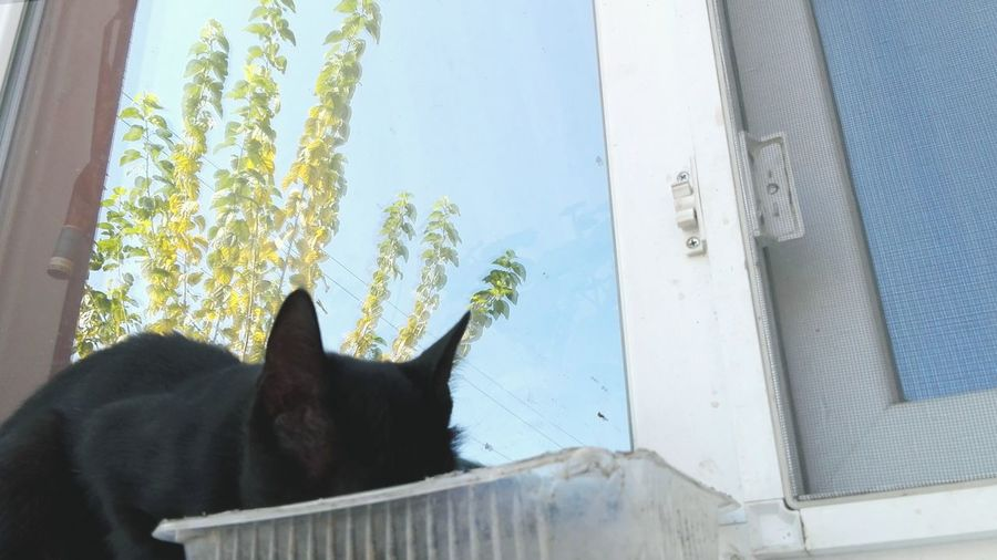 Cat Cat Eating Uppon Window Cat Eating Window Reflections Reflection EyeEm Selects One Animal Domestic Cat Animal Themes Domestic Animals Window Pets Mammal Day No People Feline Sky Low Angle View Nature Close-up