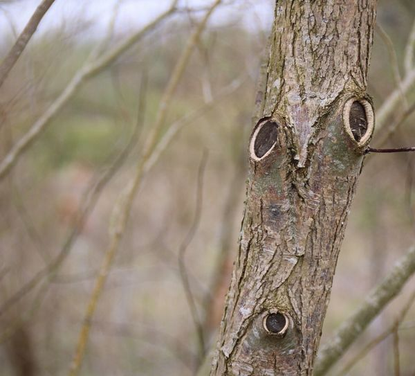 I see a face in this tree, do you see what I see?? Trees Do You See What I See? Humour Oh! Nature_collection Faces In Places Face In The Wood Do You See It? Look Eyes Watching You Eyes Imagination Tree Spirits Natures Beauty Lincolnshire Amateurphotography