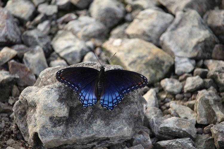 butterfly Sea