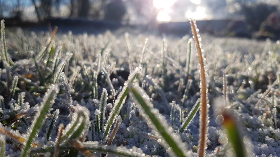 Frozen grass in the sunshine Frozen Frozen Nature Grass Garden Frozen Grass Light Flower Field Sky Blade Of Grass Frost Snow Ice Crystal Snow Covered Weather Condition Ice Snowcapped Cold