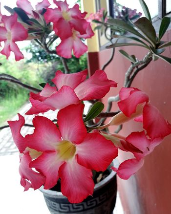 red flowers flourish Red Flowers Red Flower At Its Best Flower Collection The Best Flower Beautiful Nature Amaging Flower Art Art Floral Art Flowers Growing Plants Flower Petal Red No People Plant Nature Close-up Pink Color Flower Head Outdoors Orchid Beauty In Nature Freshness Growth Fruit Fragility Day