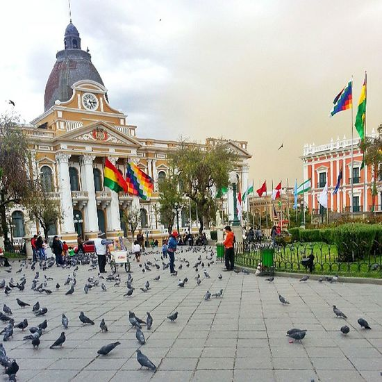 I've never seen so many pigeons in my life! There's hundreds of them in Plaza Murillo!
