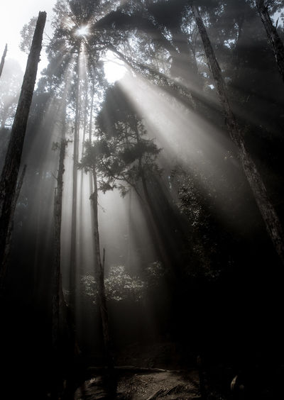 the holy light Beauty In Nature Branch Day Forest Forest Photography Growth Hazy  Landscape Light And Shadow Low Angle View Mist Misty Nature No People Outdoors Scenics Sky Sunbeam Tranquil Scene Tranquility Tree Tree Trunk