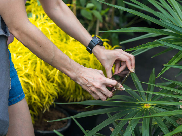 Midsection of man photographing plant with mobile phone