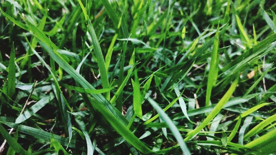 Green Color Growth Plant Nature Grass Field Full Frame No People Backgrounds Day Outdoors Close-up Leaf Beauty In Nature Freshness Fragility Somenting Green 3XSPhotographiUnity 3XSPUnity Ipatinga
