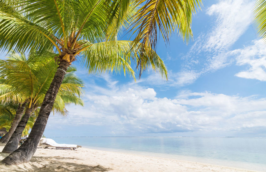 Relaxing on a perfect beach Bali Beauty In Nature Blue Sky Breathtaking View Coconut Holiday Honeymoon Honeymooning Horizon Over Water Idylic Idyllic Scenery Island Love Mauritius Mauritius Island  Palm Trees Palm Trees On The Beach Nature Paradise Relaxing Resort Romance Sand Summer Sureal Tropical