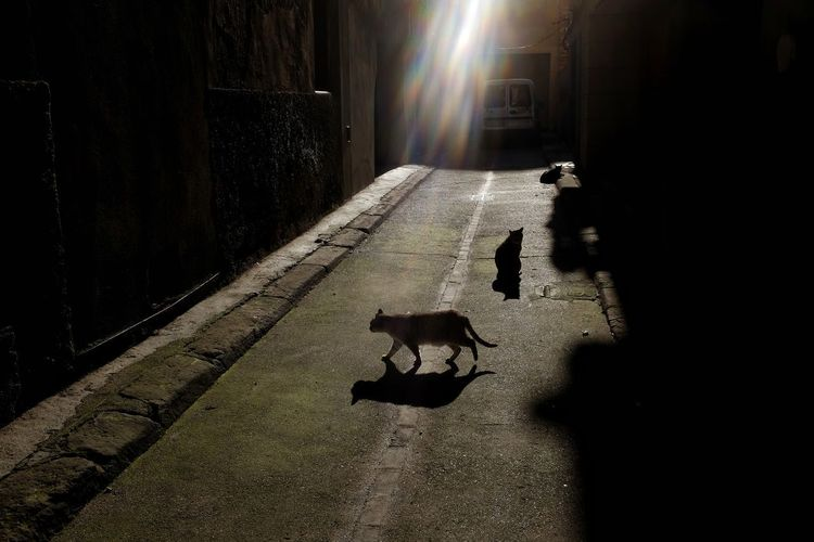 Mewrry Chrsitmas. Streetphoto Streetphotography Light And Shadow Street Photography Silhouette Streetphoto_color FUJIFILM X100S Shadows & Lights Illuminated Shadow Animal Themes Bat - Animal Stray Animal Carnivora Feline Siamese Cat Ginger Cat Big Cat Cat Whisker Domestic Cat Kitten