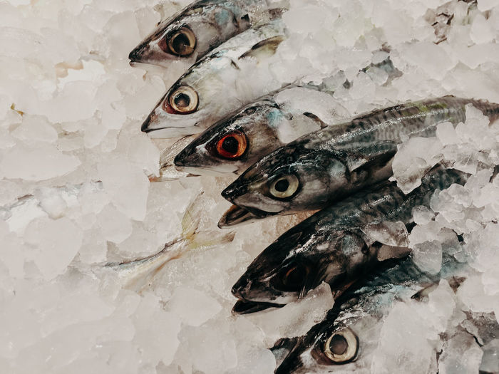High angle view of fish on ice