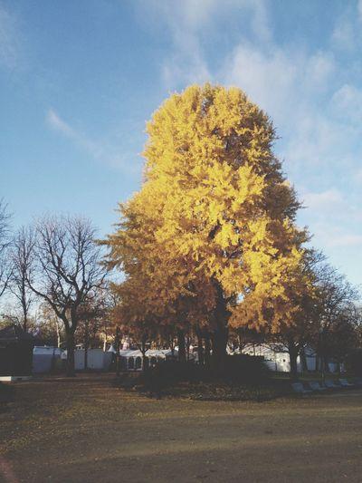Automne Golden Leaf