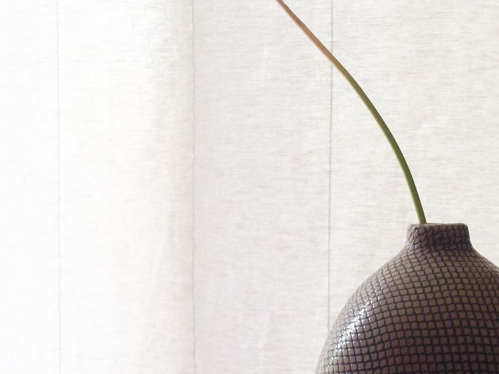 A portion of a plant stem in a vase