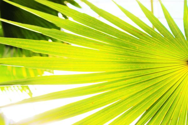 Palm Leaf Leaf Nature Palm Tree Close-up Frond Green Color Backgrounds Tree No People Complexity Outdoors Day Freshness