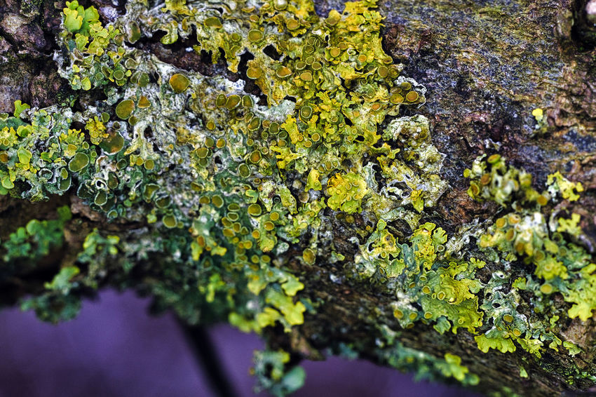 Beauty In Nature Fragility Freshness Fungus Growth Moss Nature