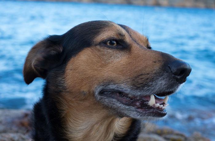 Animal Animal Head  Brown Dog Dog Love DogLove Doglover Dogs Dog❤ Domestic Animals Mammal One Animal Pets Portrait Xseries Xt1
