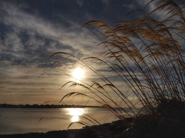 Sunset Nature Sky Sun Beauty In Nature Scenics Tranquil Scene Tranquility Silhouette No People Water Sea Outdoors Scotland 💕 Beauty In Nature Day Backgrounds Nature Pampas Grass In The Breeze Pampas Grass Perspectives On Nature