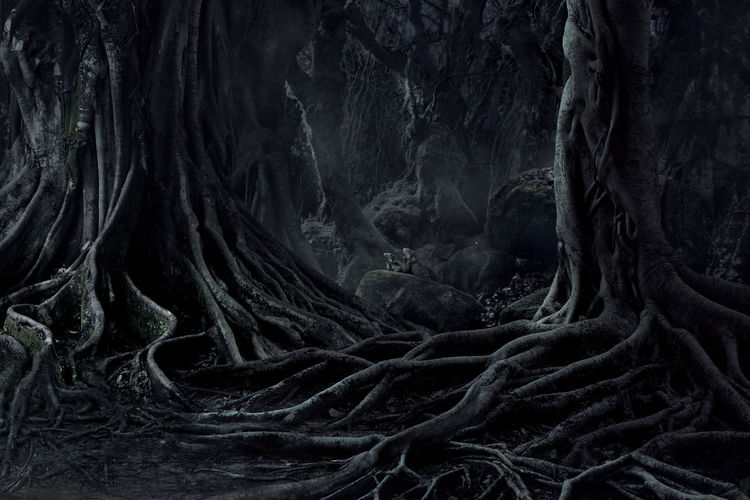 Spooky Halloween dead mysterious forest creepy trees with twisted roots and two lizard on misty night forest. Scary concept. Dark Evil Fear Halloween Horror Moon Nature Tree Wood Blackandwhite Crows Dangerous Dead Evening Forest Mist Mood Moonlight Mystery Night Nightmare Roots Of Tree Scary Shadow Spooky