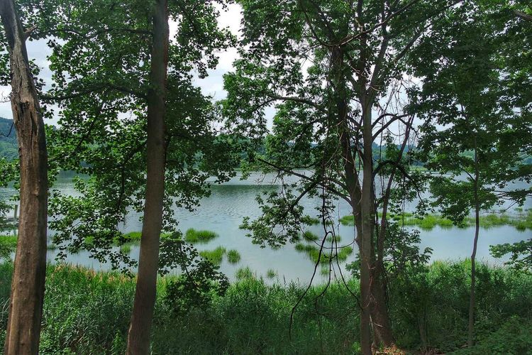 Backgrounds Beauty In Nature Day Growth Growth Lake Nature Nature Nature Photography Nature_collection No People Outdoors Pond Reflection Scenics Sky Summer Tranquility Tree Treesnature Water