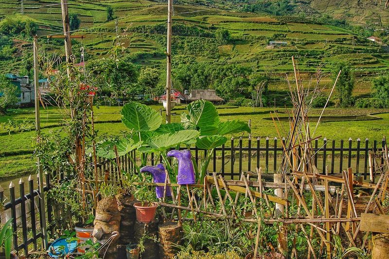 Vietnam Sapa Plant Growth No People Day Nature Green Color Fence Built Structure Field Outdoors Grass Flower Flowering Plant Beauty In Nature Barrier Architecture Boundary Pattern Full Frame Land