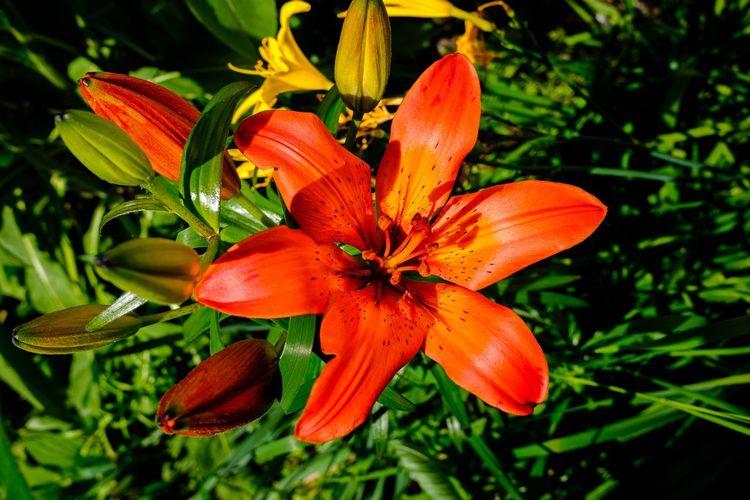 Plant at Lillestrøm Flower Flower Head FujifilmX70