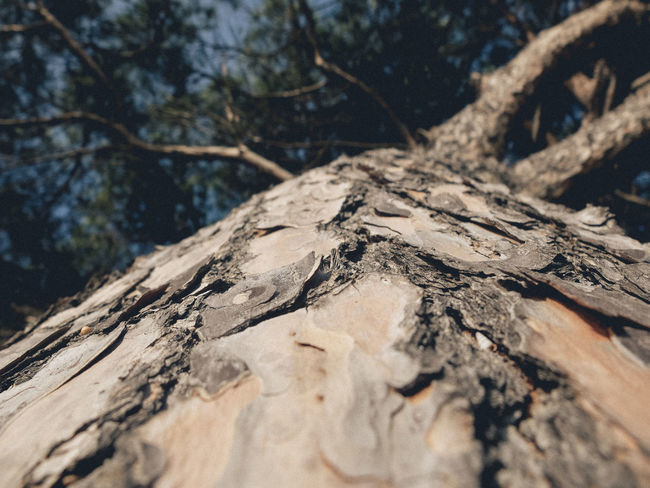 Nature Outdoors No People Tree Day Shadow Landscape Forest Scenics Beauty In Nature Close-up Sky Fujifilm_xseries Fujifilm Andalucía SPAIN Fujifilm X30 Cadiz Trunk Trunk Tree Bark Bark Of A Tree