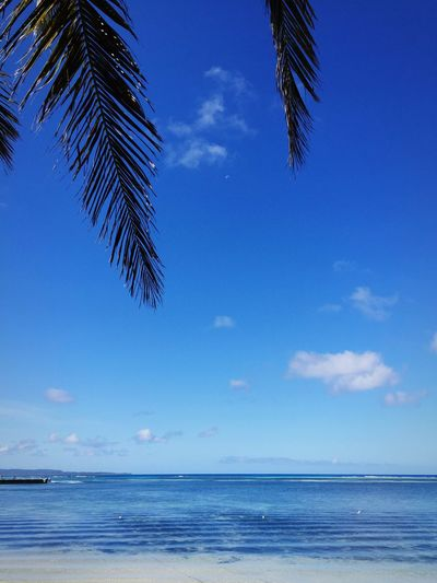 Scenic view of palm trees against blue sky