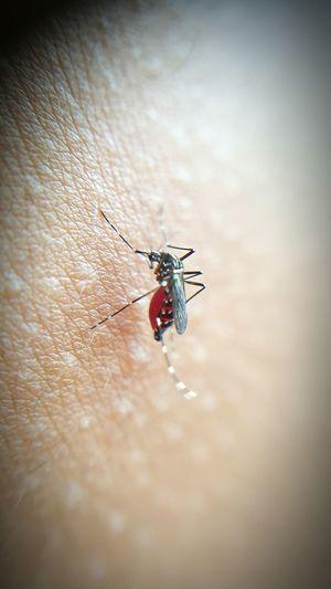 Mosquito Coolshot Macro Gross Bloodsucker Bloodsuckinginsects