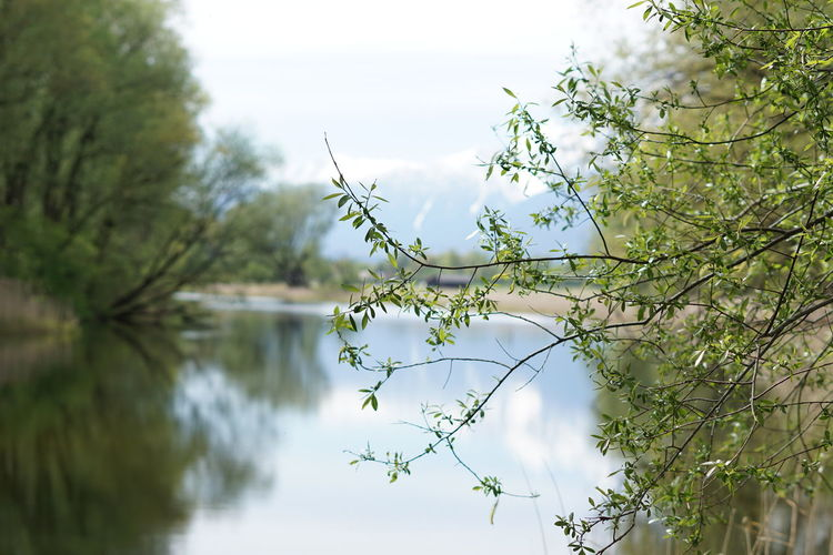 Tree Water Lake Reflection Sky Non-urban Scene Tranquility Branch Countryside Woods Tranquil Scene Growing Scenics Idyllic Calm Lakeside Beauty In Nature Horizon Over Water Shore Stream Mountain Seascape Ocean Rocky Mountains Mountain Road Foggy Scenic View Rock Formation Waterfront Tree Trunk