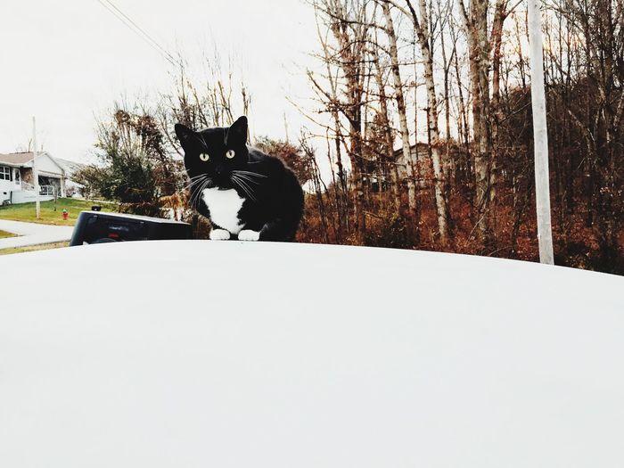 Cat Xander