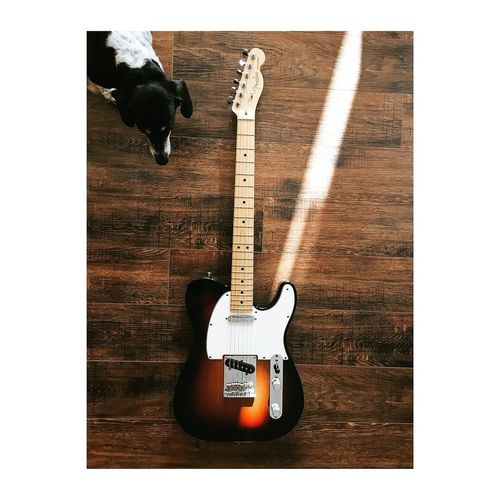 Coop, hanging out with my tele. Guitarist Music Daschund Fender Telecaster Guitar Musical Equipment String Instrument Music Wood - Material Arts Culture And Entertainment