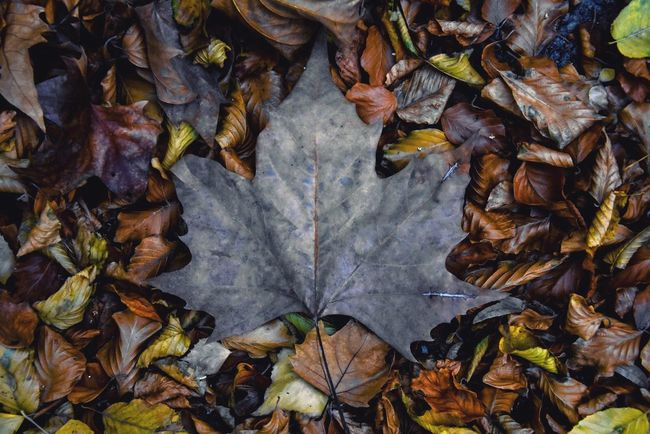 Leaf Autumn Dry Change Leaves Directly Above Beauty In Nature Close-up Field No People