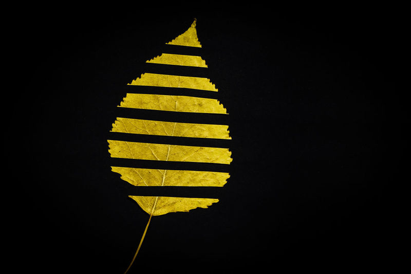 Black Background Close-up Copy Space Dark Illuminated Indoors  Leaf Light Lighting Equipment Low Angle View Nature Night No People Pattern Shadow Shape Striped Studio Shot Wall - Building Feature Yellow
