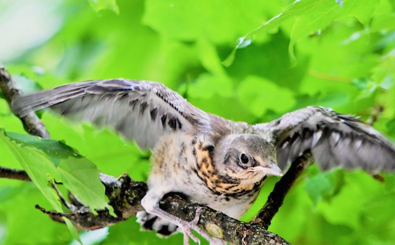 Animal Themes Animal Wildlife Animals In The Wild Bird Bird Of Prey Branch Close-up Day Focus On Foreground Nature No People One Animal Outdoors Spread Wings