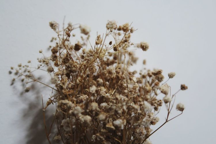 EyeEm Selects EyeEm Selects Dried Flowers Baby Breath Gift Flower Nature Growth Fragility Blossom Plant No People Beauty In Nature Close-up Flower Head Freshness Day Outdoors
