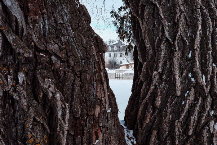 A view to the past. Tree Fissure Time Fissure Historical Building Historical Monuments Trappist Canada Bark Old House Prairie Scenes