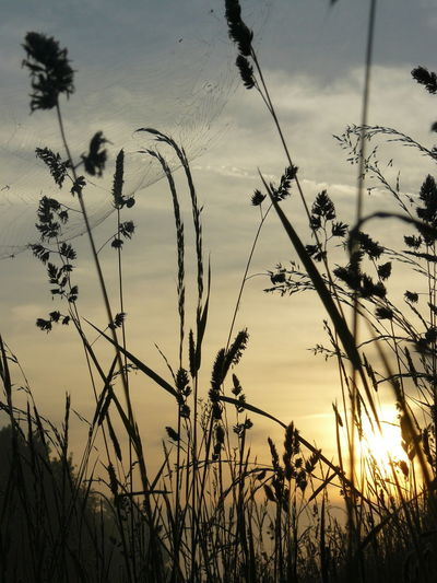 Field Morning Light Nature Nature Photography Sunset Rural Scene Silhouette Sky Plant