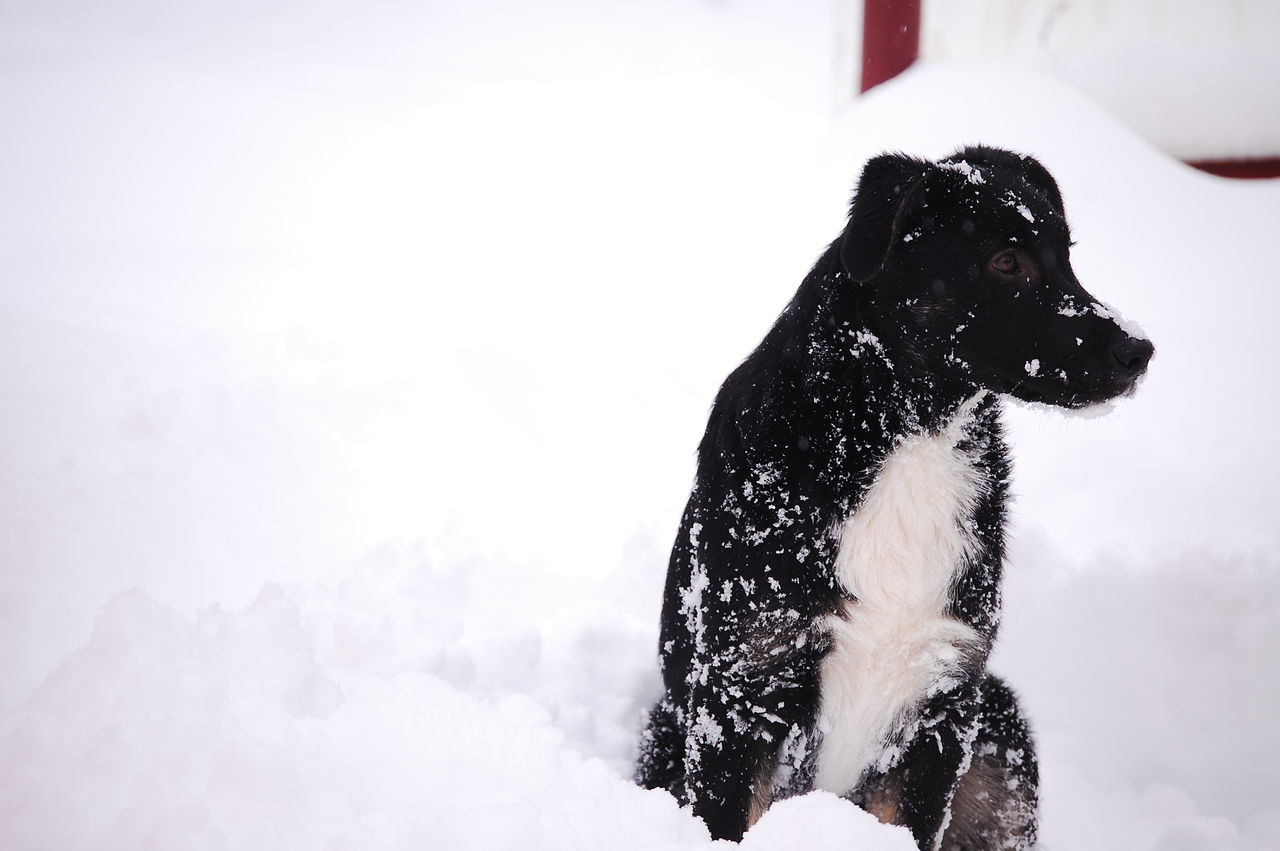 Dog Sitting On Snowfield