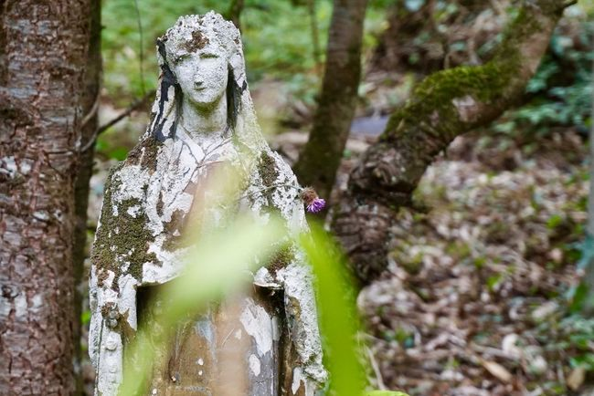 Madonna Moulin De Chaves Beauty In Nature Close-up Day Forest Fragility Growth Human Representation Moss Nature No People Outdoors Statue Tree Tree Trunk