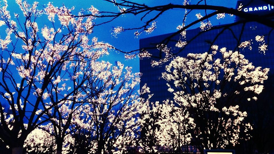 Flowers of the Lights. Seoul , Korea . Discover Your City