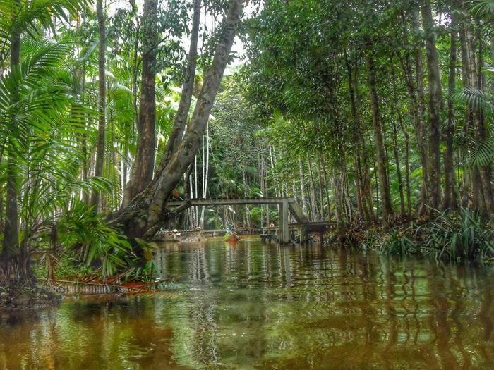 Lindo lugar! Água doce... 😍😍😍 Agua Vida Doce Nature Fonte Igarapés Brazil Macapá Wonderful ExploringBrazil Natural Beauty