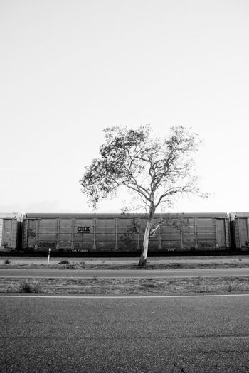 Autorack and a tree in Mira Loma. Autorack Benchingsteelgiants Benching Freightjunkies